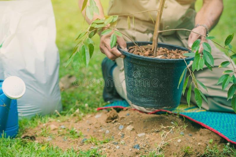 Волонтеры подготавливают засадить деревья для мемориала стоковые фото