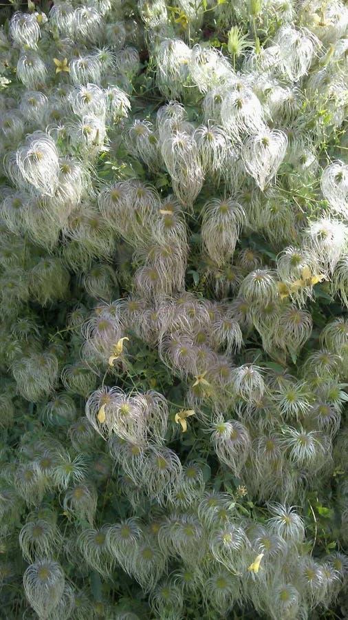 Волосы природы стоковое изображение rf
