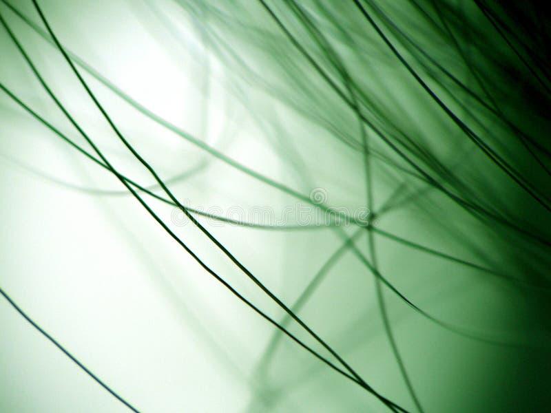 волосяный покров стоковая фотография