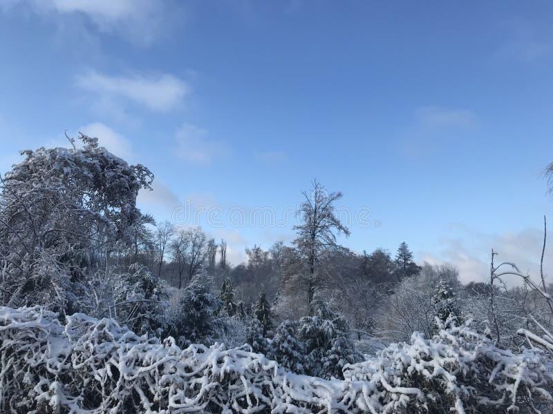 Волшебная зима в ZP стоковая фотография