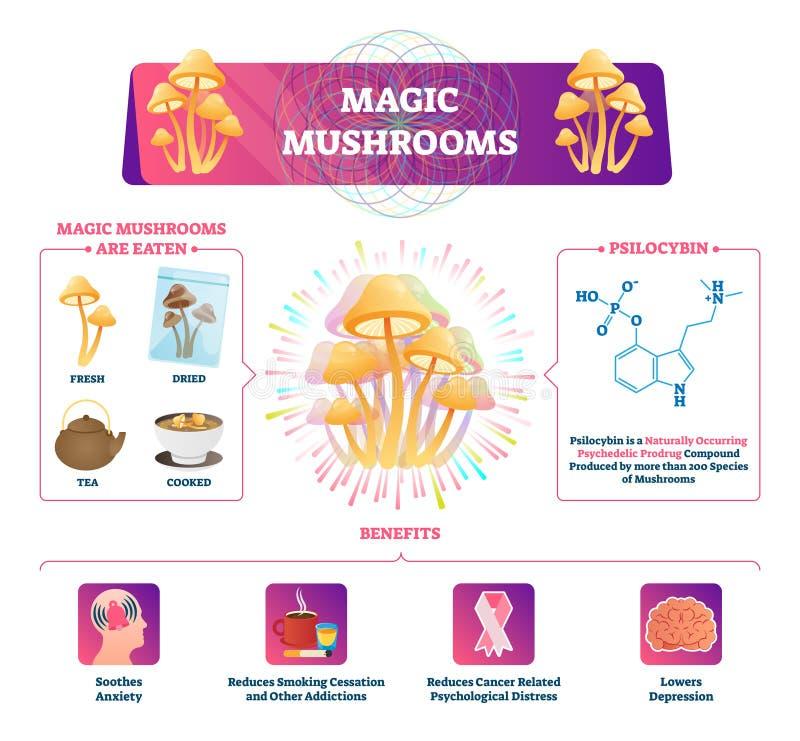 Волшебная иллюстрация вектора грибов Обозначенные характеристики графическая схема иллюстрация вектора