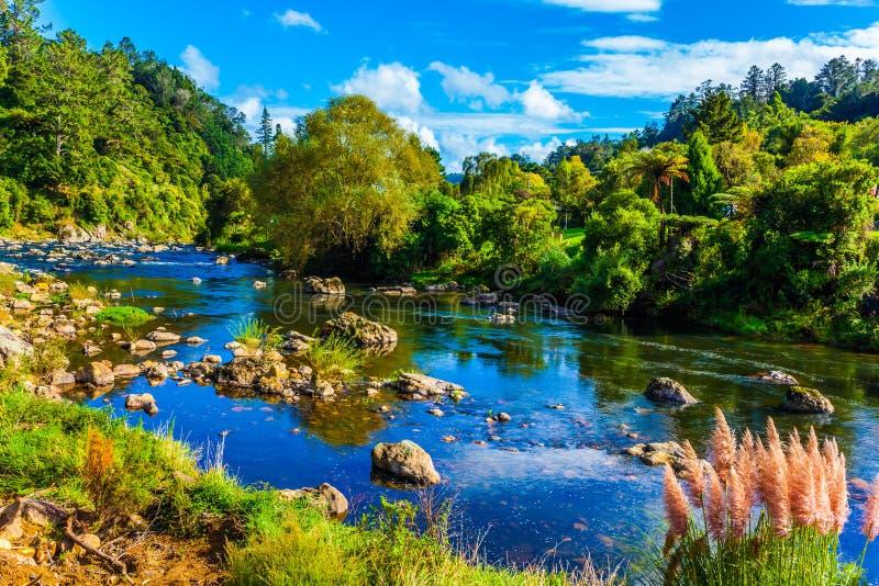 Волшебная красота небольшое озеро и тростники стоковые фото