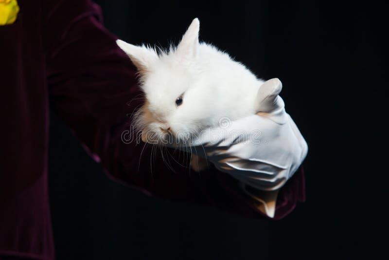 Волшебник с кроликом, человек Juggler, смешная персона, черная магия, иллюзия на черной предпосылке стоковые изображения rf