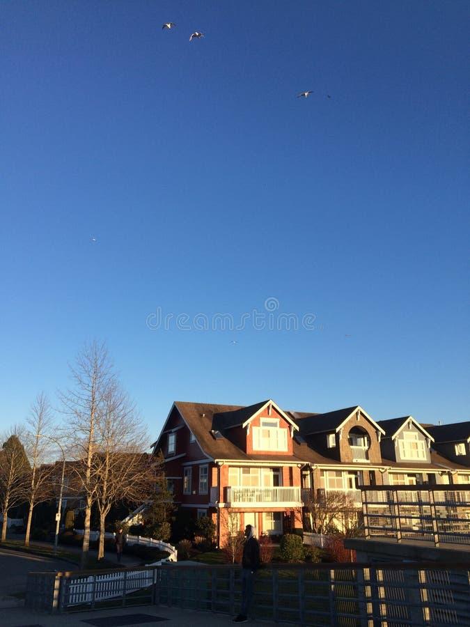 Волшебное утро в парке Стэнли, Ванкувер стоковые изображения rf