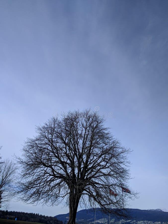Волшебное утро в парке Стэнли, Ванкувер стоковые изображения