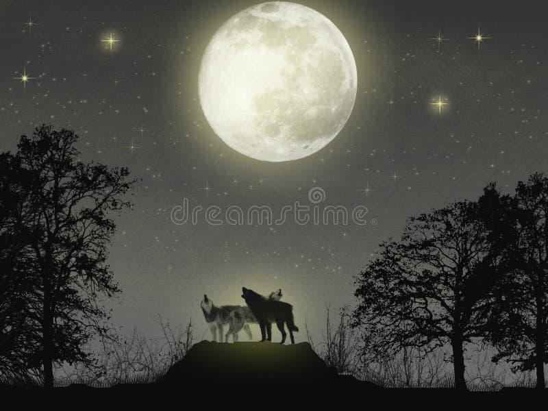 волшебные волки стоковая фотография rf