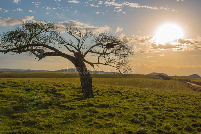 Волшебные дерево и заход солнца сумрака стоковая фотография rf