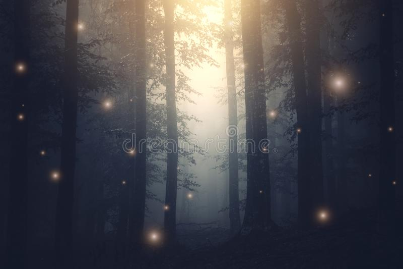 Волшебные света феи фантазии в заколдованном лесе с туманом стоковая фотография rf