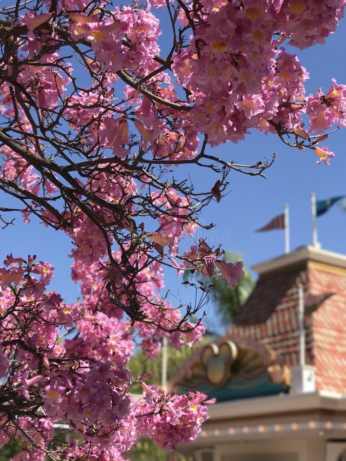 Волшебные цветения стоковая фотография rf