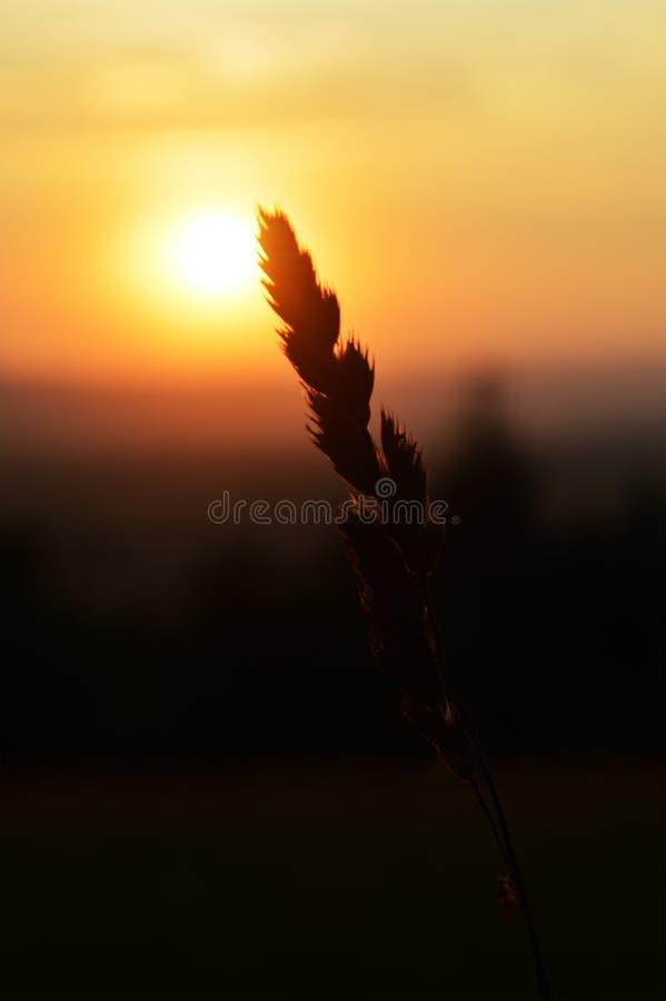 Волшебный конец солнечного дня в красивой природе стоковая фотография rf
