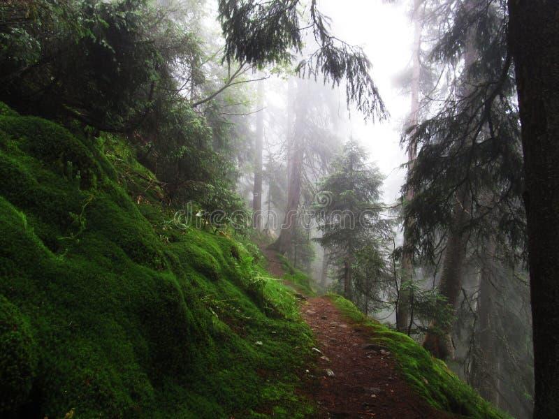 Волшебный лес в Карпатах стоковая фотография rf