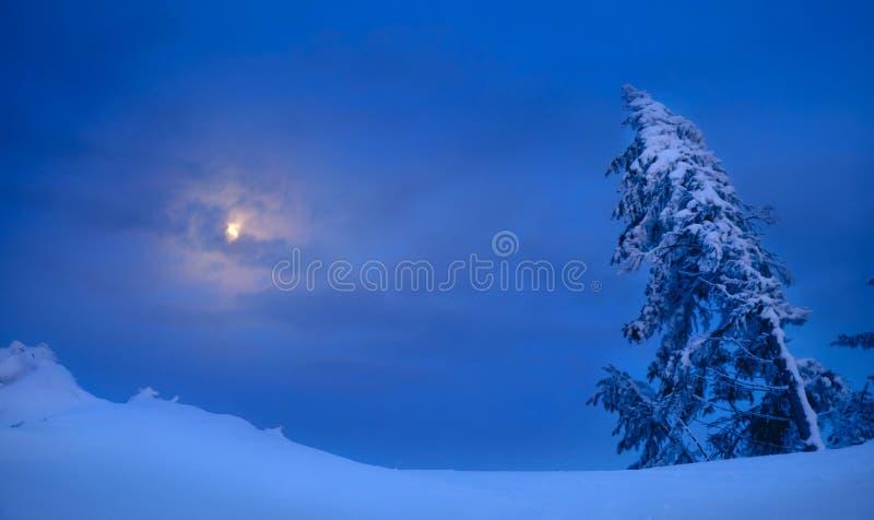 Волшебный лес зимы покрытый на заходе солнца стоковые изображения rf