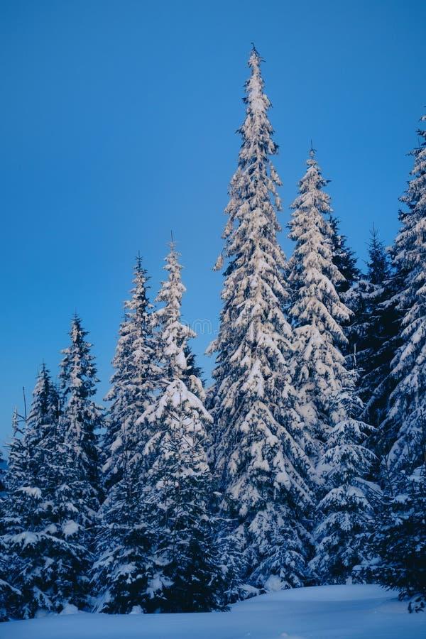 Волшебный лес зимы покрытый снегом на восходе солнца стоковые фото