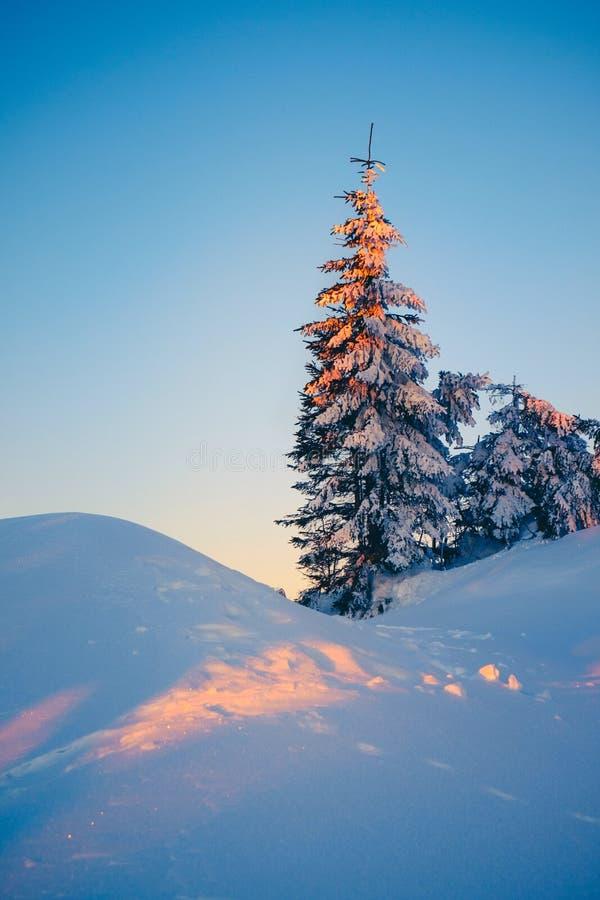 Волшебный лес зимы покрытый снегом на восходе солнца стоковое фото rf