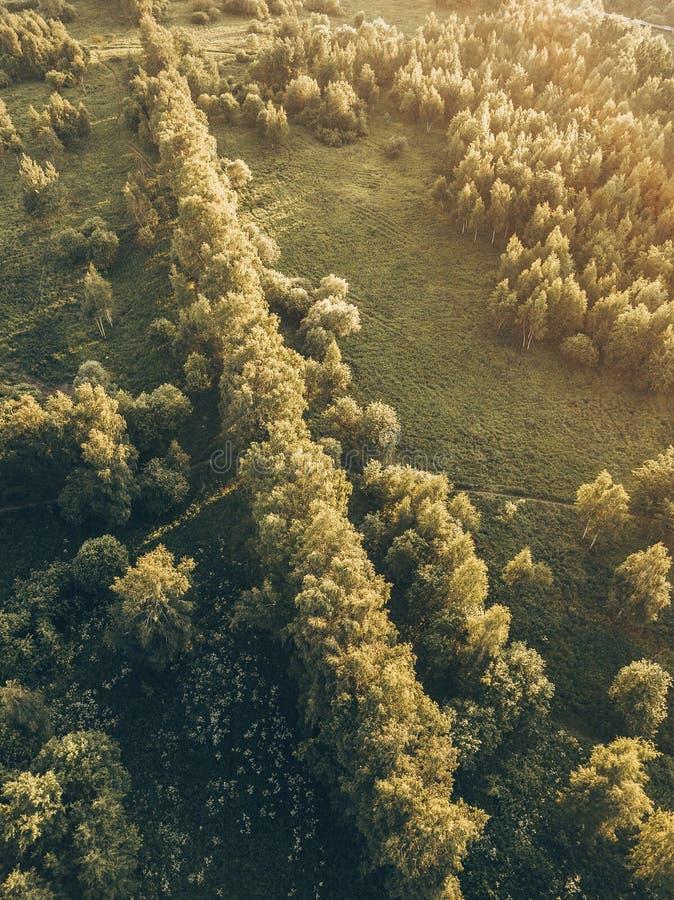 Волшебный свет в treetops, воздушный захват стоковые фото