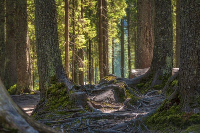 Волшебный солнечный лес стоковое изображение rf
