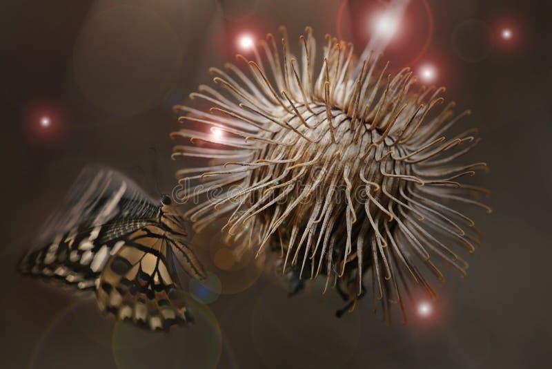 Волшебный цветок стоковое изображение