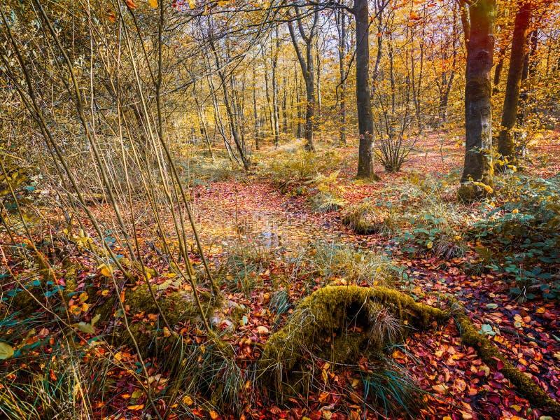 Волшебный glade леса с золотами, коричневыми цветами и желтыми цветами осени стоковая фотография rf