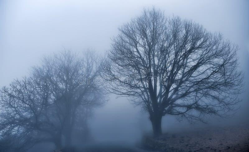 волшебство тумана стоковое фото