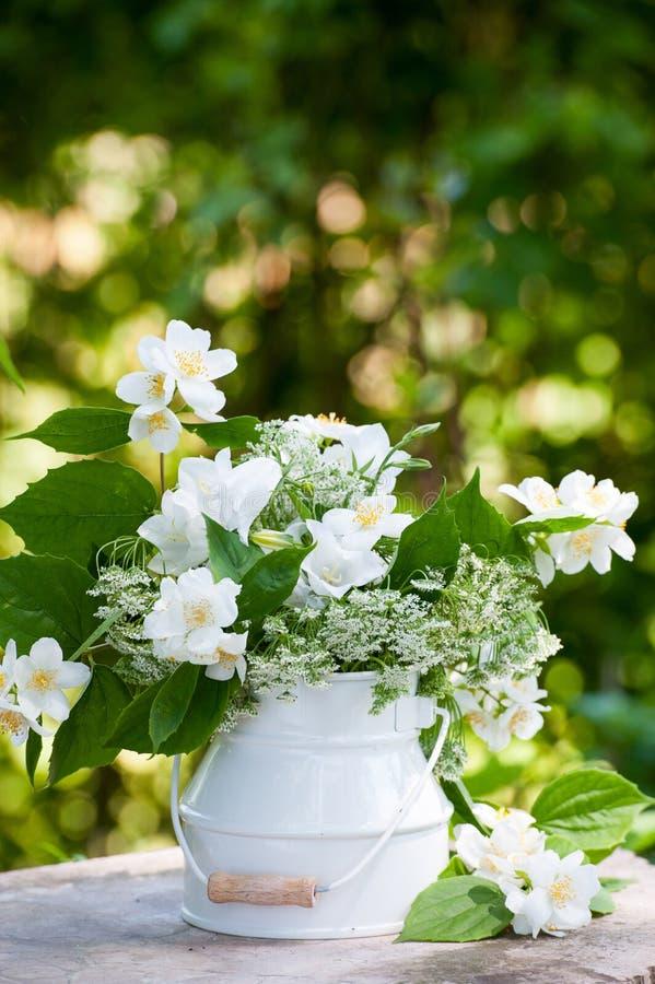 вопрос жасмина цветков разницах в предпосылки славный сезонный стоковое изображение rf