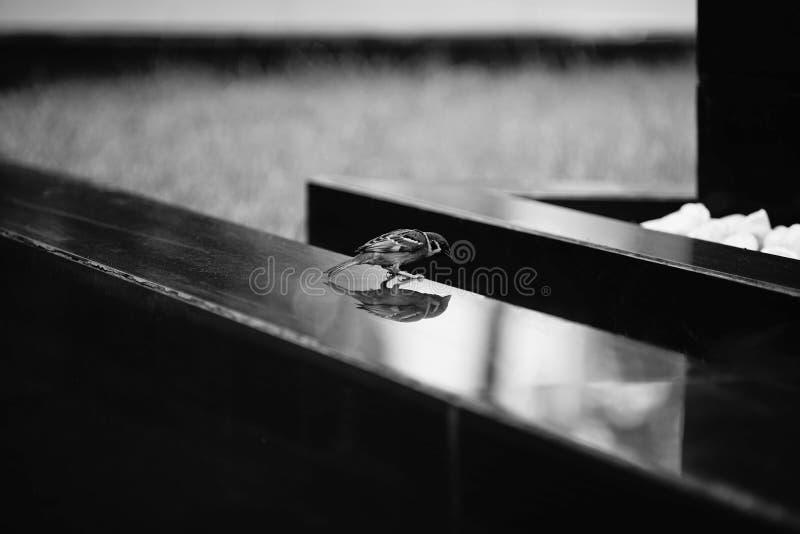 Воробей и тень дома на сияющей плитке, черно-белом стиле изображения, селективном фокусе стоковые изображения