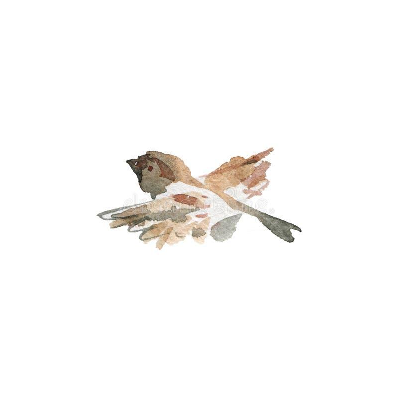 Воробей летания акварели иллюстрация штока