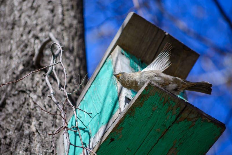 Воробей сидя на дереве в кормушке стоковое изображение
