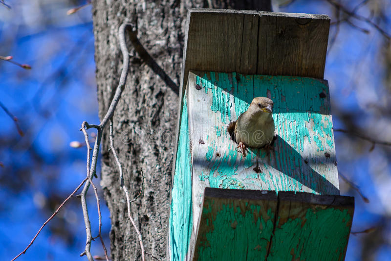 Воробей сидя на дереве в кормушке стоковая фотография