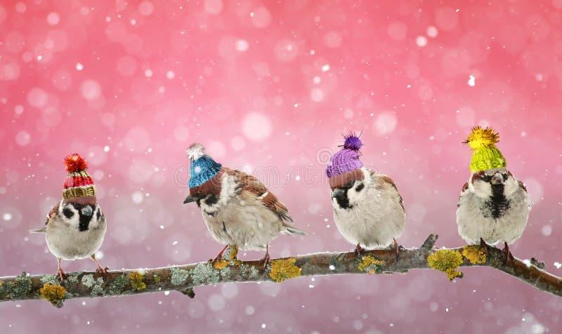 Воробей 4 смешной птиц сидя на ветви в рождестве зимы стоковая фотография rf