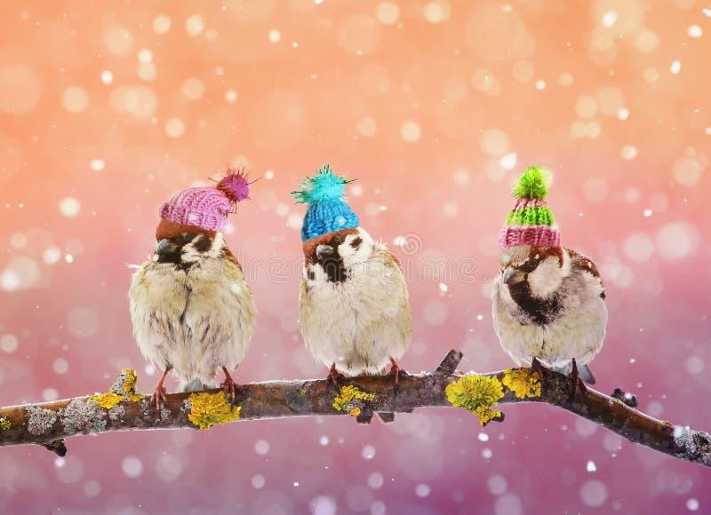 Воробей 3 смешной птиц сидя на ветви в wintergarden i стоковые фото