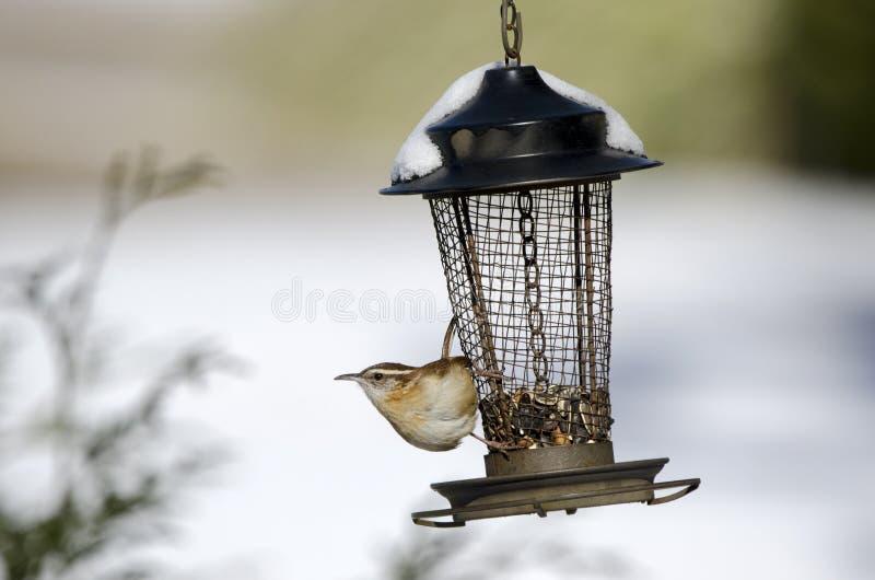 Воробьинообразная птица крапивниковые Каролины на снеге покрыла фидер птицы, Georgia, США стоковое изображение rf