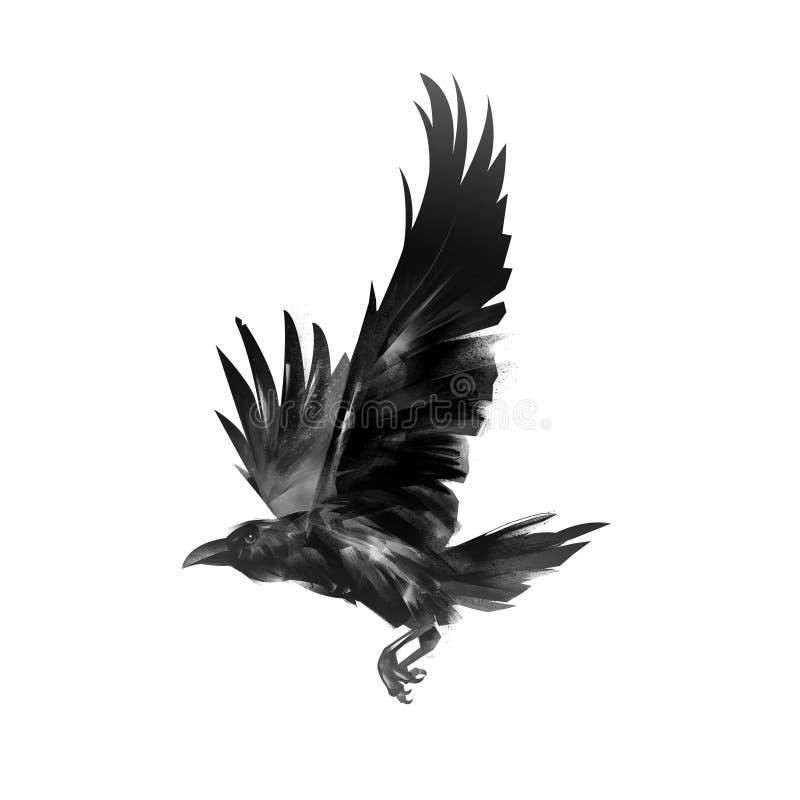 Ворона летая изолированная изображением черная стоковое фото rf