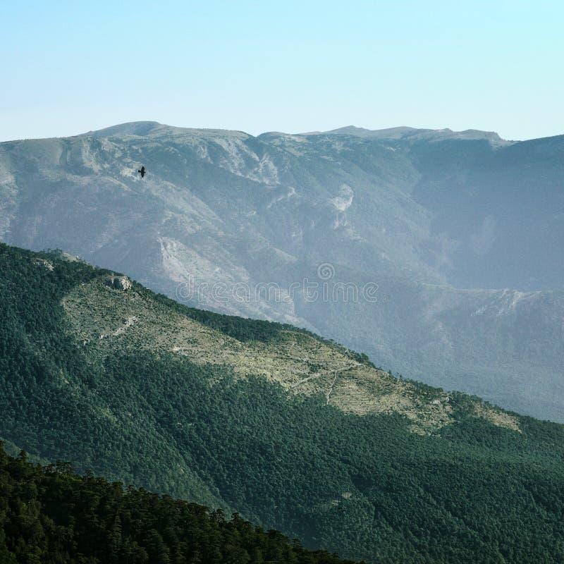 Ворона летая над холмами стоковое фото rf