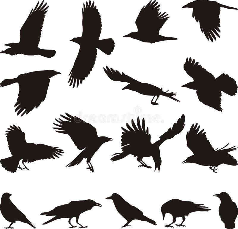 ворона мяса стоковая фотография