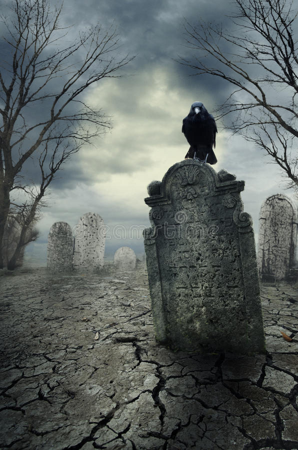 Ворона на надгробной плите стоковая фотография
