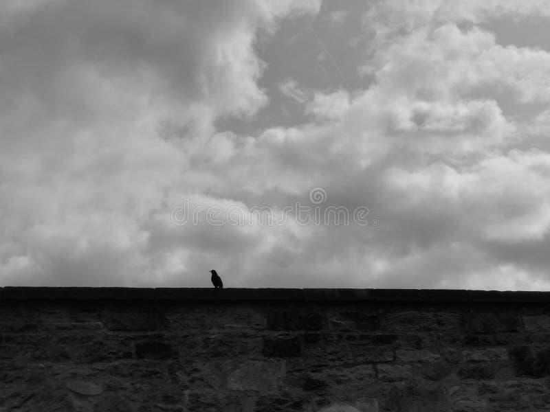 Ворона на стене кладбища стоковое фото rf