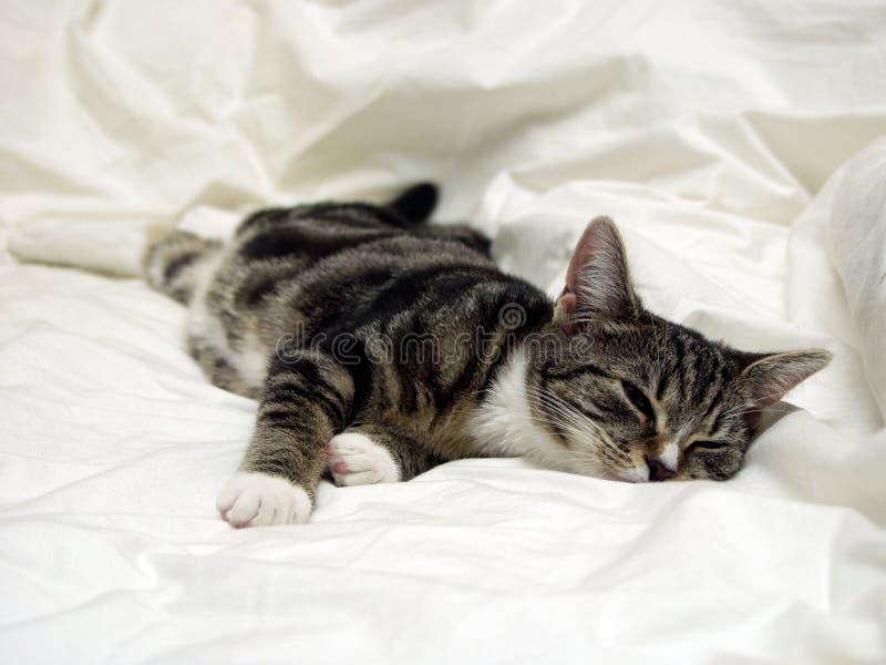 ворсина кота