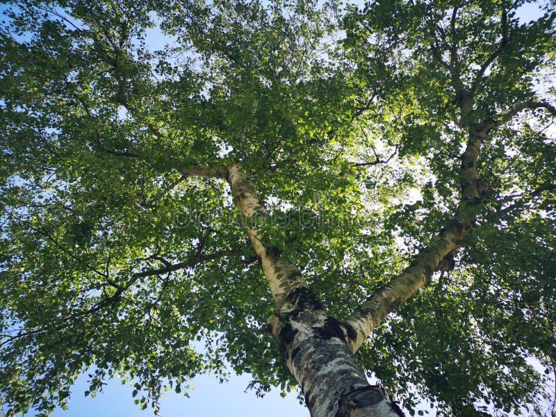 Ворсина под деревом стоковое фото rf