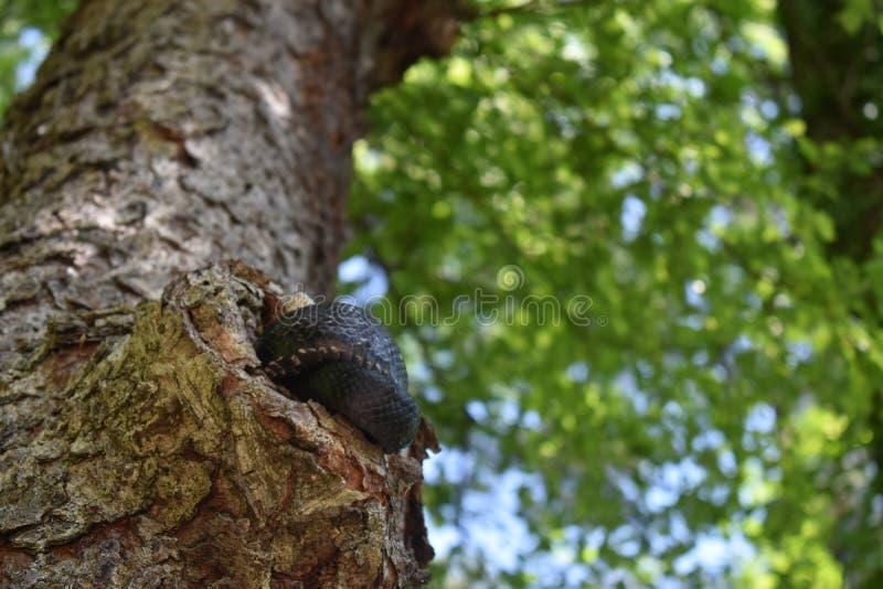 Ворсина после полудня в дереве стоковое изображение rf