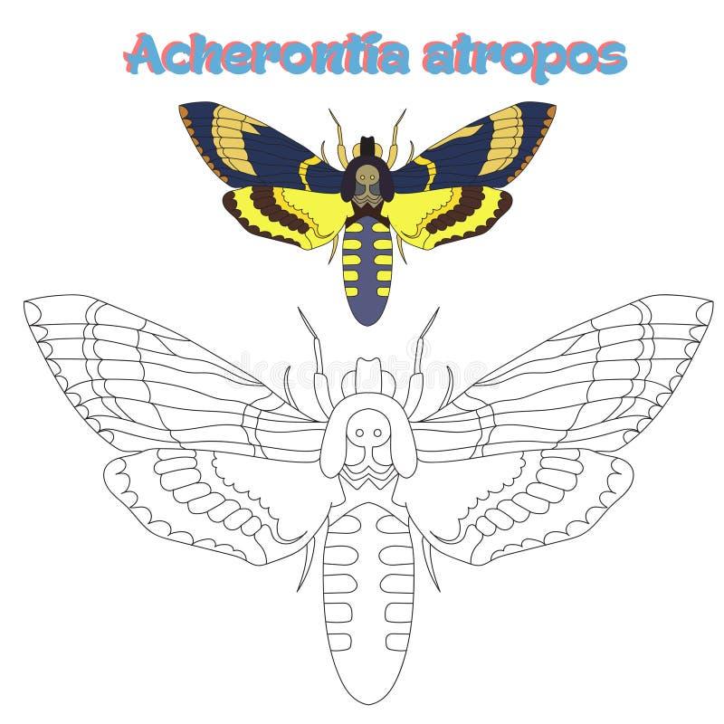 Воспитательный gamecoloring вектор бабочки книги иллюстрация штока