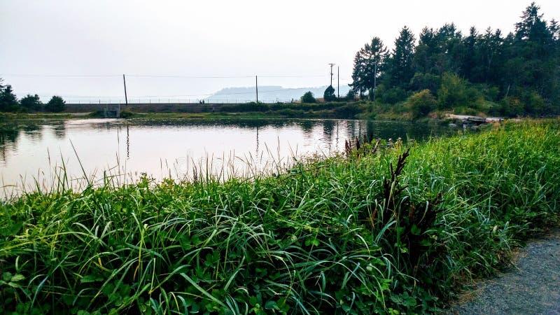 Восстановленная естественная среда обитания болота стоковые фото