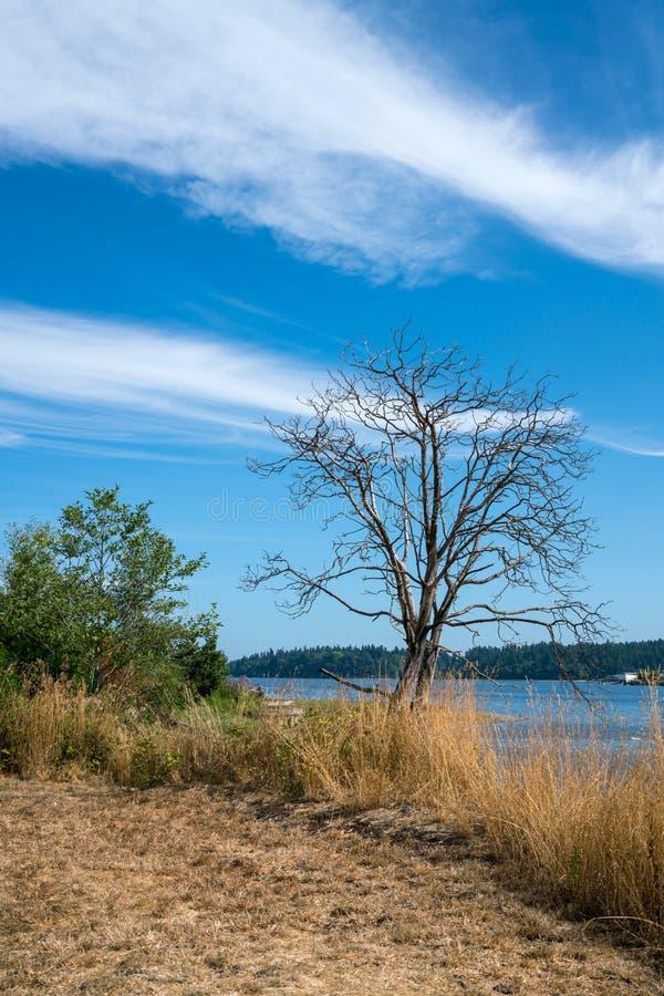 Восточная Олимпия Вашингтон залива стоковые изображения rf