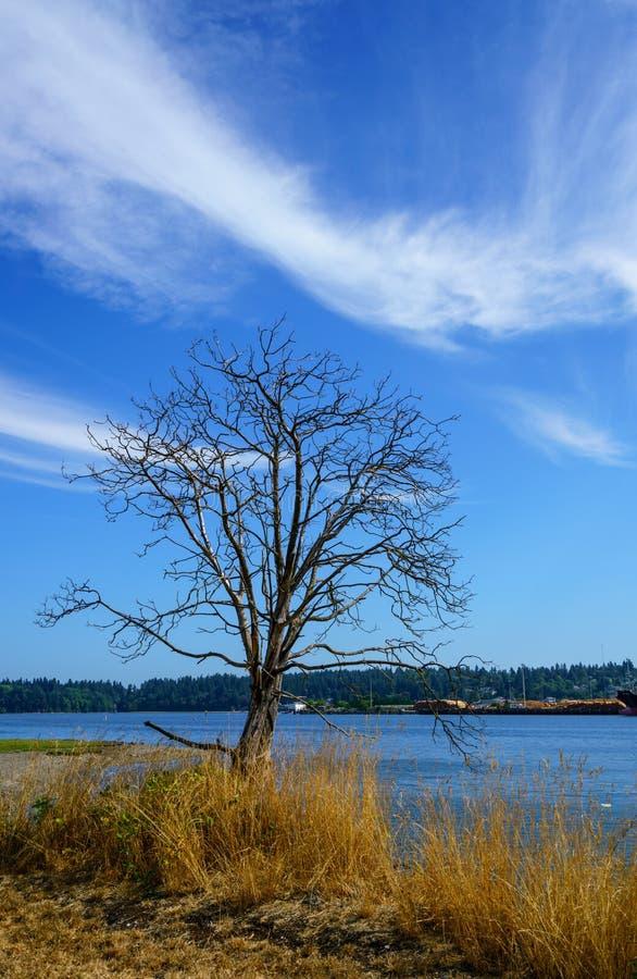 Восточная Олимпия Вашингтон залива стоковое изображение