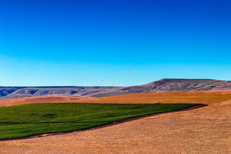 Восточное поле урожая пустыни обширного пространства Вашингтона Palouse стоковое фото rf