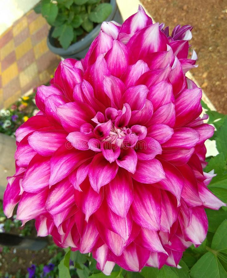 Восхитительные цветки стоковое изображение