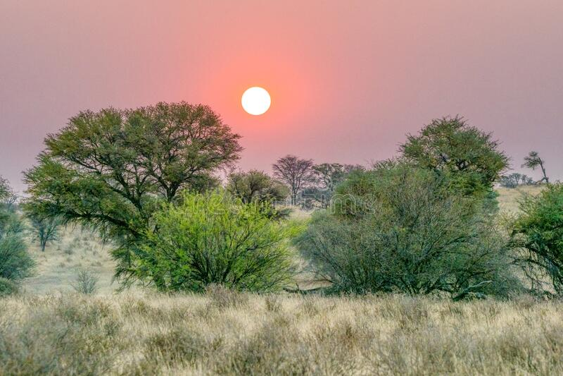 Восход в Калахари стоковое изображение rf