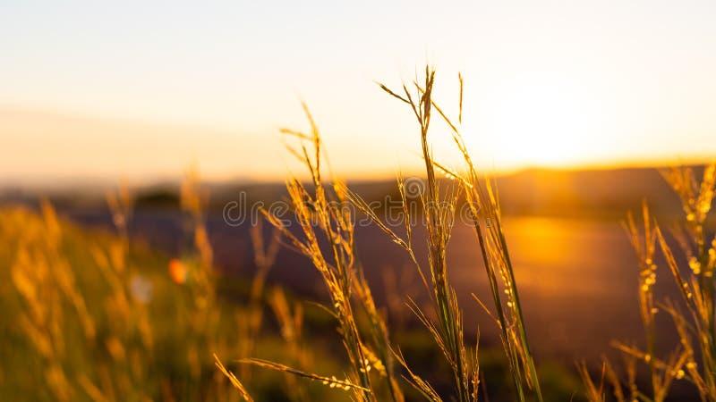 Восход в сельской местности ЮАР стоковая фотография rf