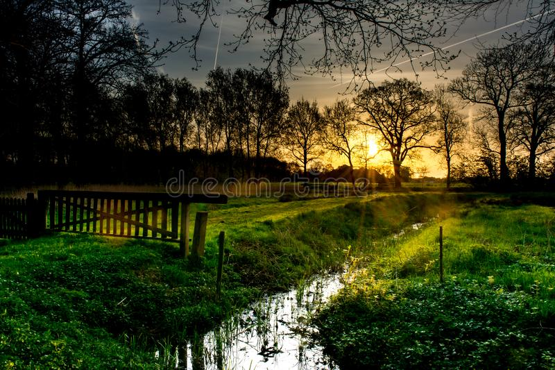Восход солнца в древесинах стоковые изображения rf