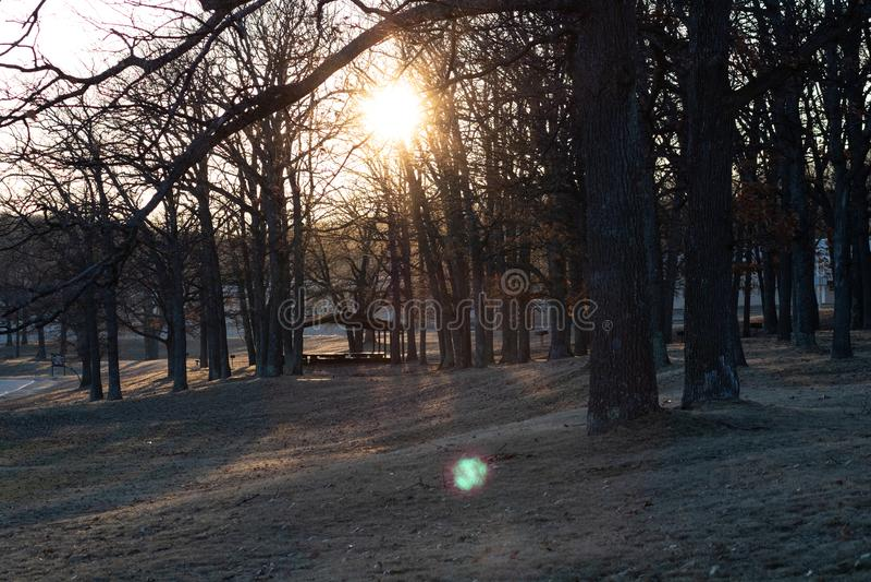 Восход солнца в пуще стоковое изображение rf