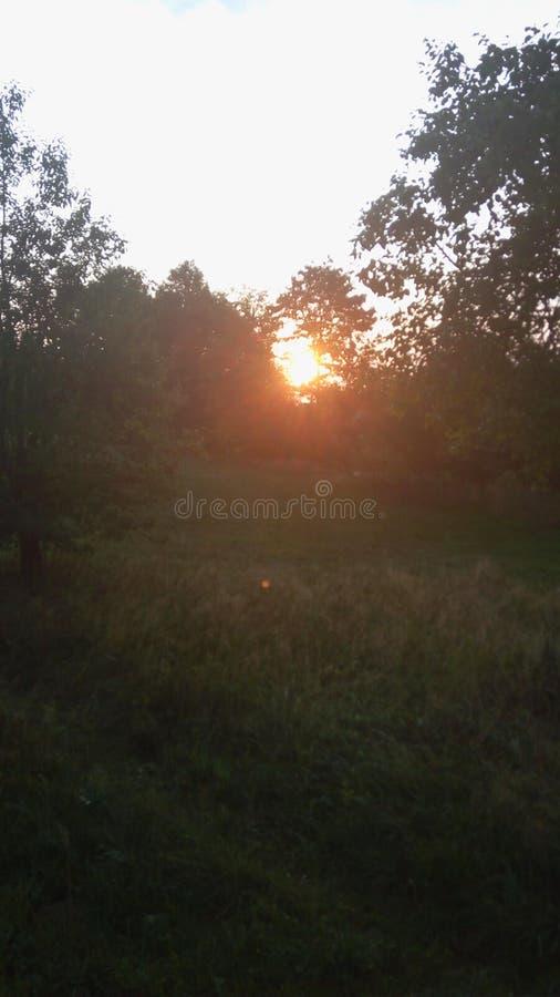 Восход солнца в саде стоковые изображения rf